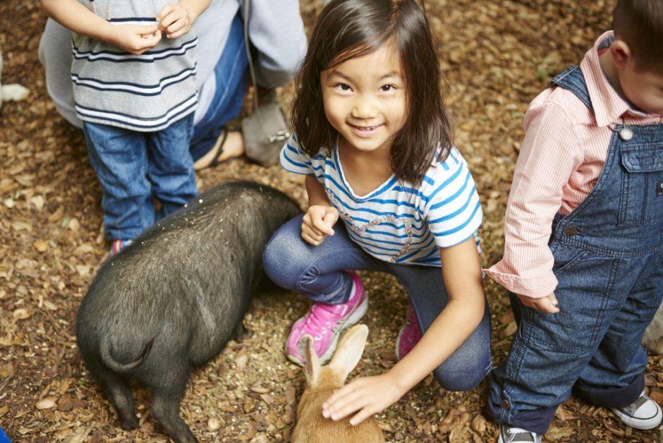 Petting-Zoo-1024x684